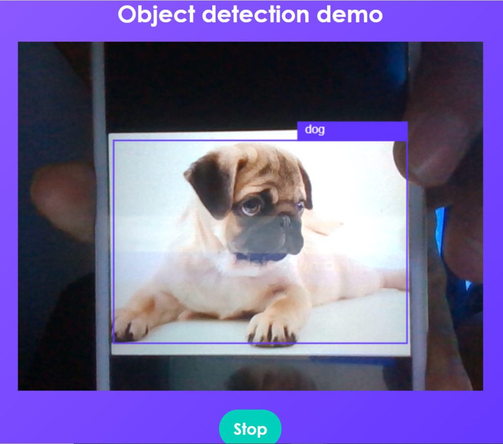 Object detection dog